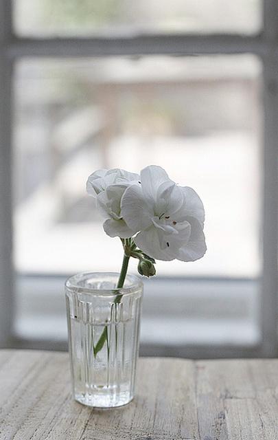 deco blanc fleur