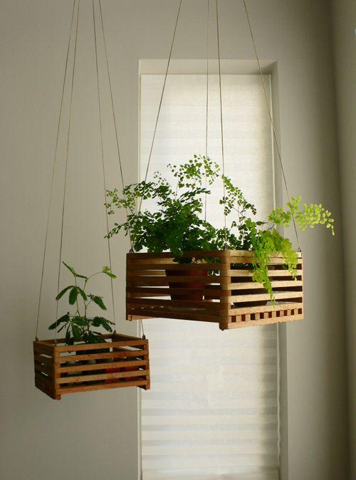 idee plante suspendue