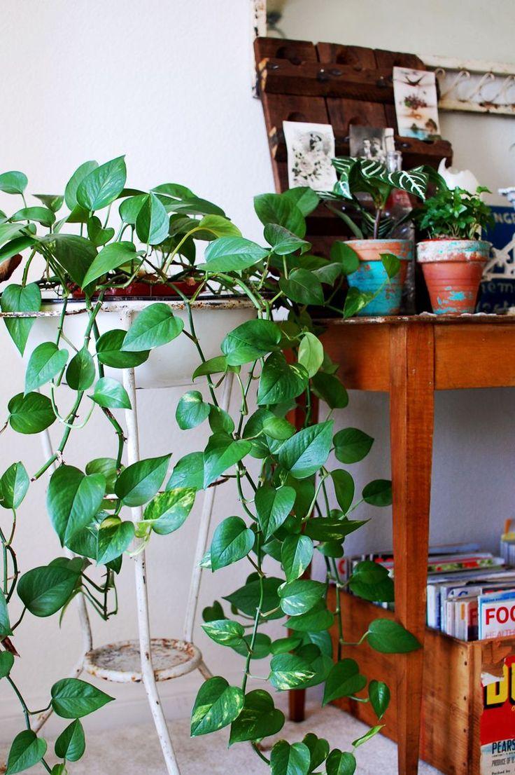 Une d co comme un jardin d hiver cocon de d coration le for Deco jardin plantes