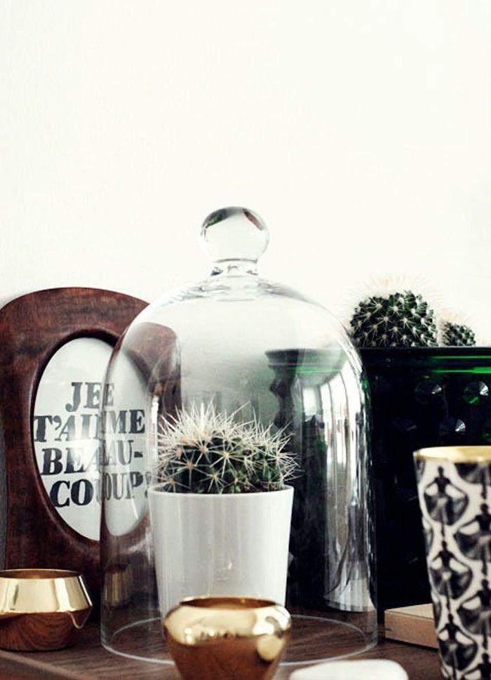 inspiration cactus et plantes cocon d co vie nomade. Black Bedroom Furniture Sets. Home Design Ideas