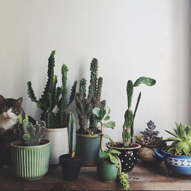 composition cactus interieur
