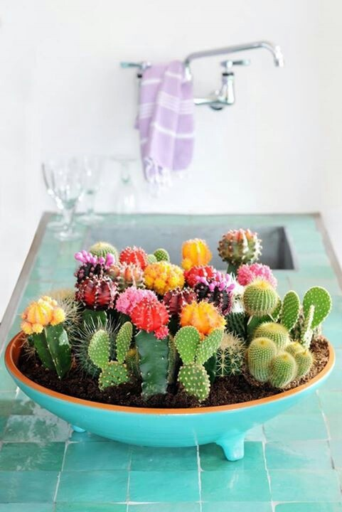 deco cuisine cactus