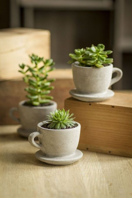 deco petite plante