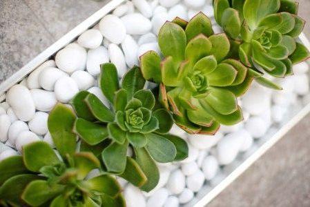 Cactus cocon de d coration le blog - Idee deco plante interieur ...