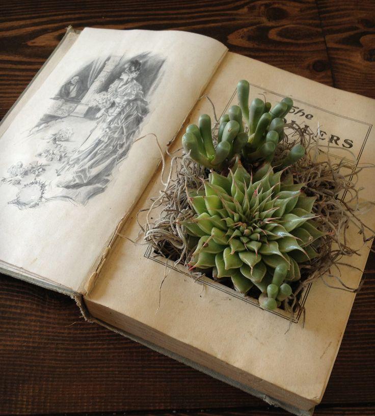upcycling livre plante