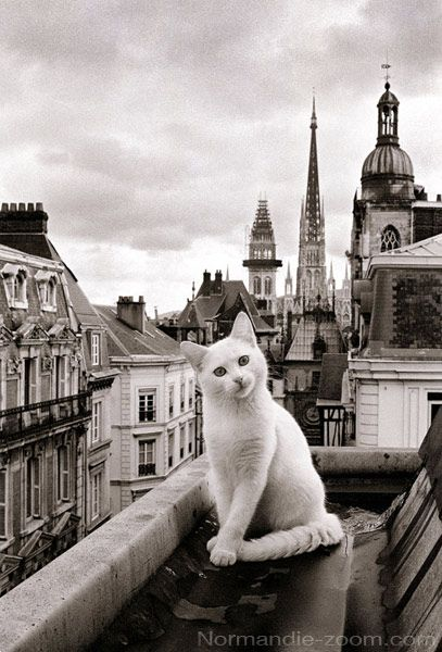 chat toits de Paris