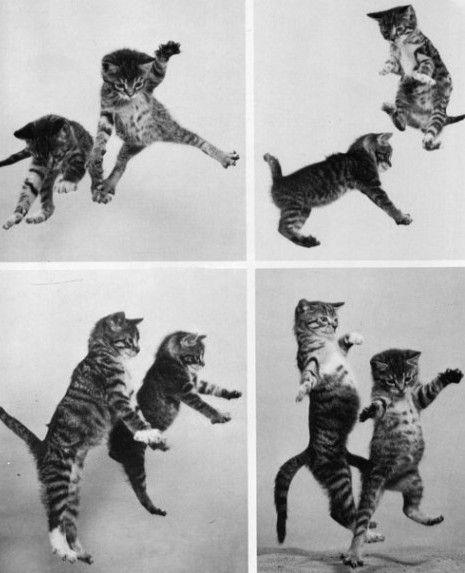petits chats fous