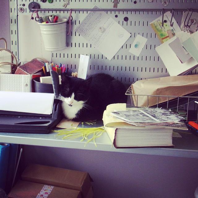 Squatage de Gros chat entre deux projets #chat