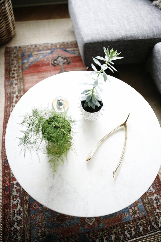 deco plante succulente