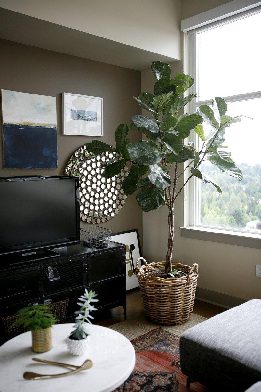 deco plante television meuble