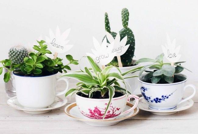 Les succulentes r chauffent votre int rieur cocon de d coration le blog - Petite plante d interieur ...