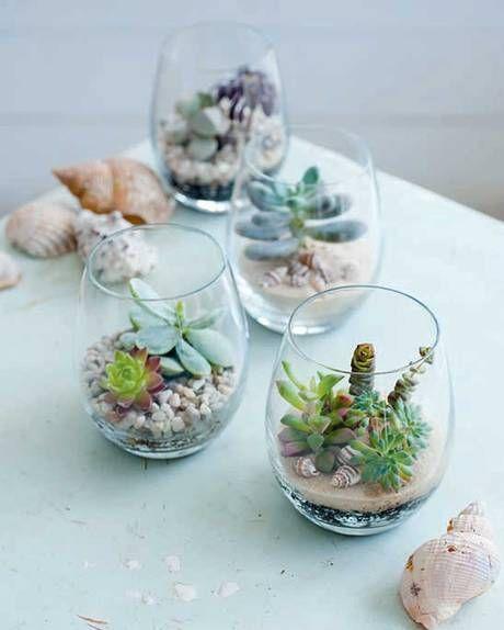 succulentes dans des verres