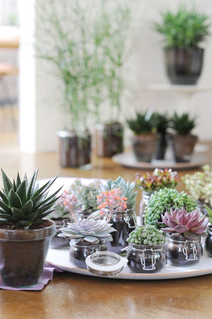 Les succulentes r chauffent votre int rieur cocon de for Petits miroirs deco