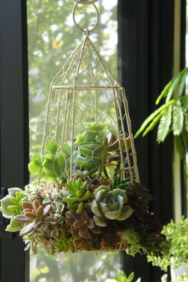 succulentes suspendues deco