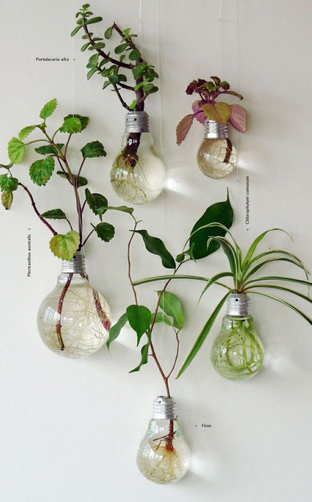 plantes vertes deco ampoules