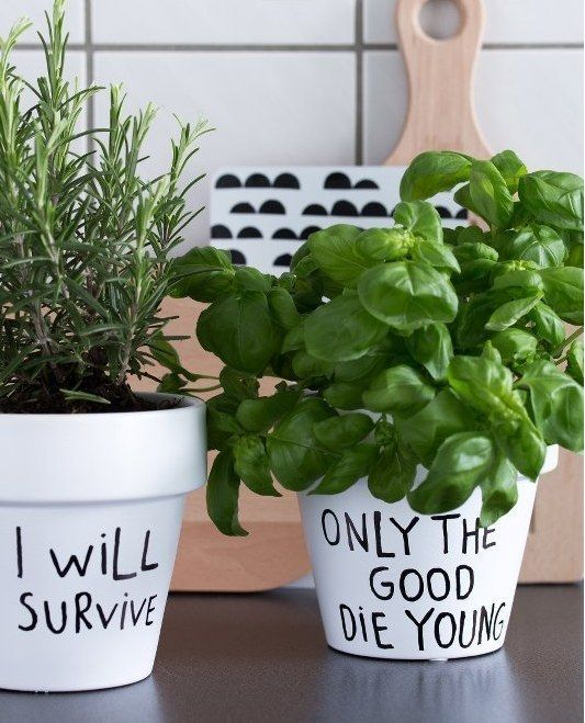 plante cuisine message pot drole
