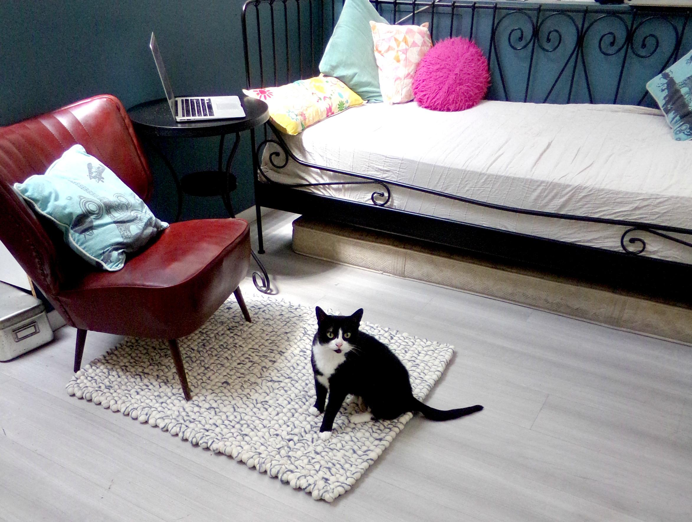 tapis de boule chat