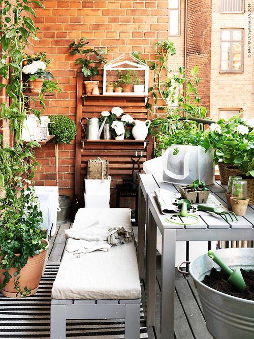 petit balcon plante verdure