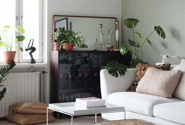 5 idees pour decorer avec des plantes