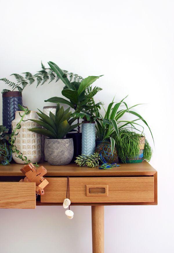 5 conseils d co pour mettre des plantes dans votre