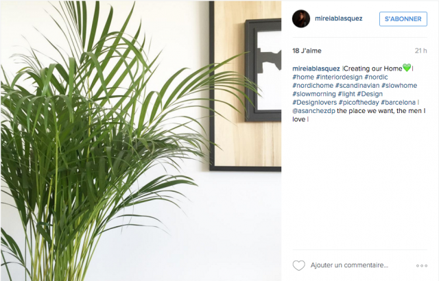 slow home plante decoration