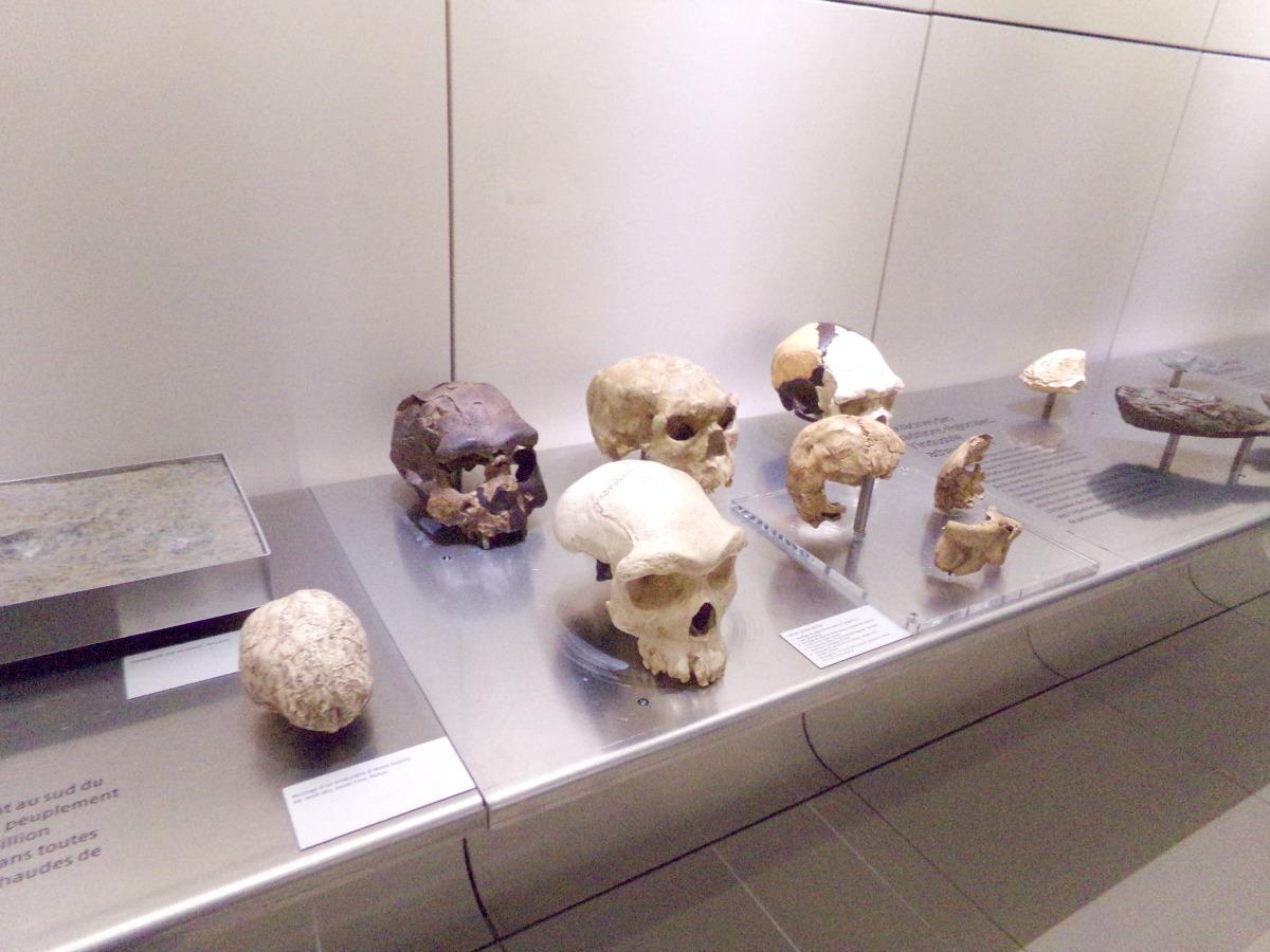 expo permanente evolution planete et homme plus dunkerque