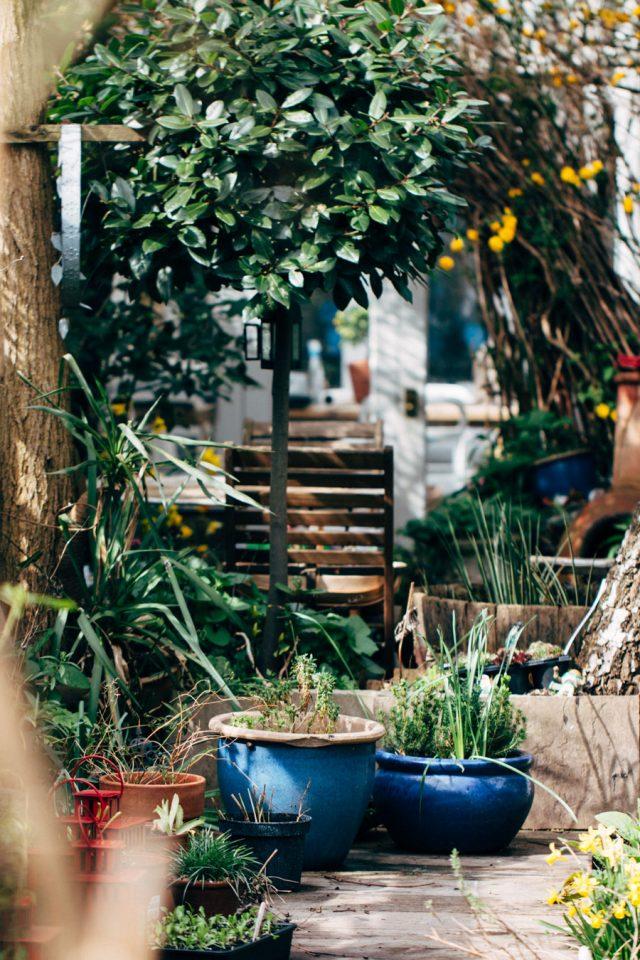 jardin deco cour plantes