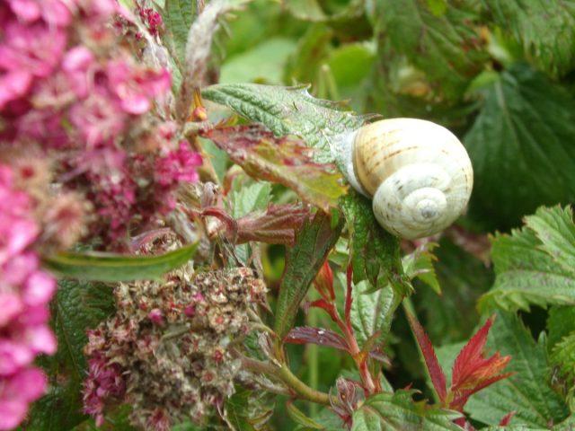 escargot macro fleur canal moeres