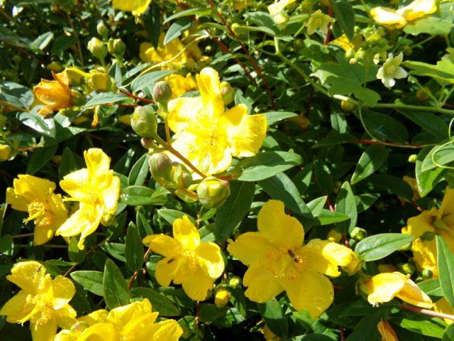 fleur et insectes ete coudekerque