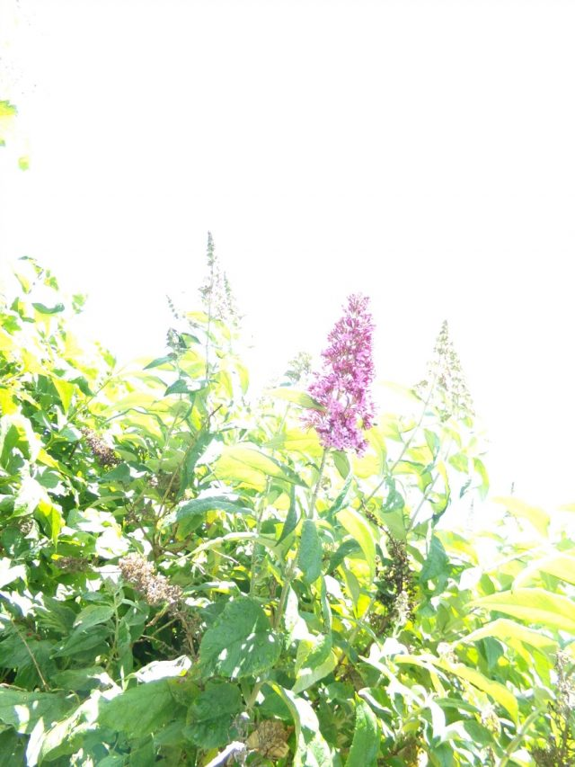 fleurs arbre coudekerque