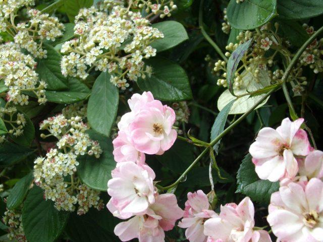 fleurs arbustes coudekerque nature promenade