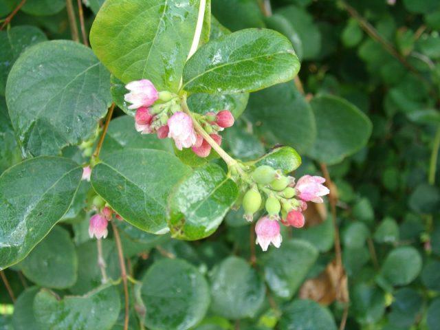 petites fleurs roses coudekerque