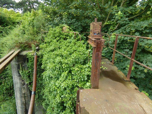 vegetation ancienne ecluse dunkerque