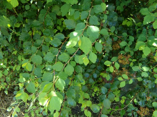 vegetation canal des moeres coudekerque