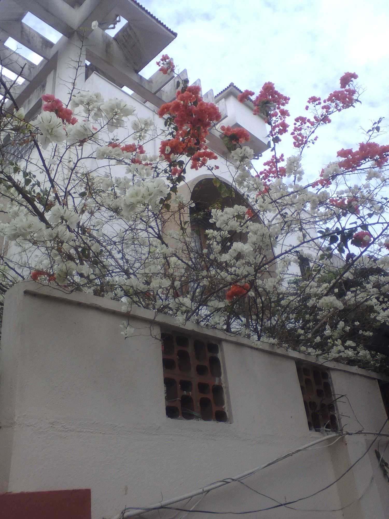 fleur chennai tamil nadu rues voyages vie nomade