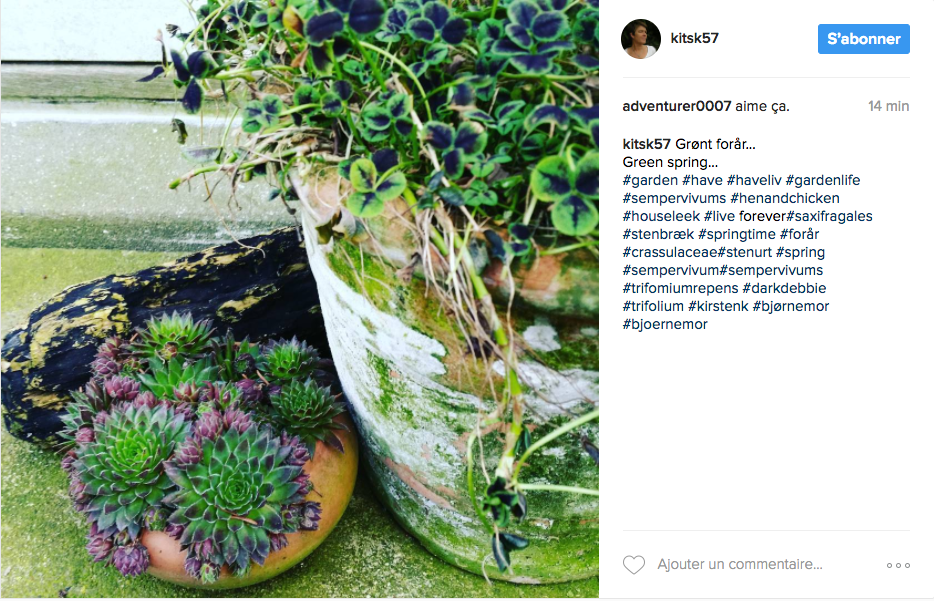 De jolies id es pour le jardin sur instagram cocon de for Plantes decoration jardin