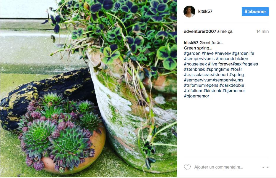 Jardin des plantes grasse jardin des plantes grasse for Jardin de plante