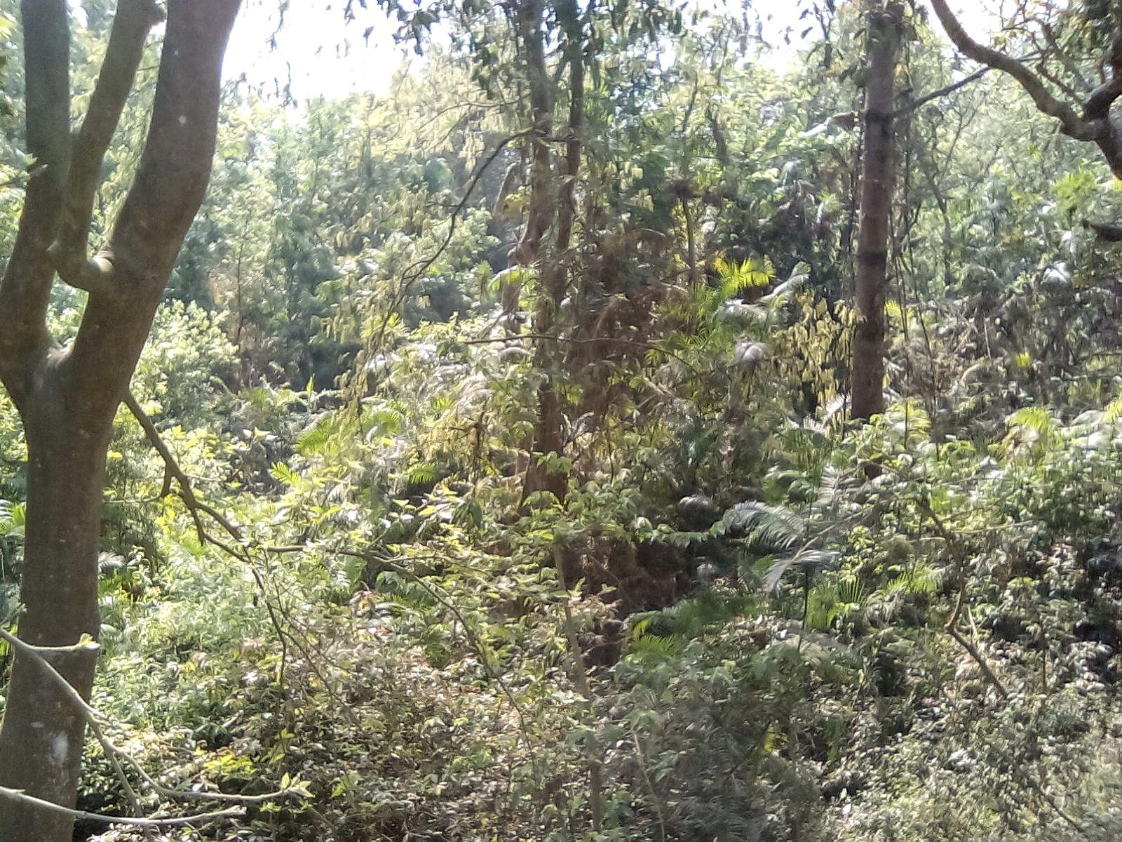 lumbini nepal parc monastique decouverte nature