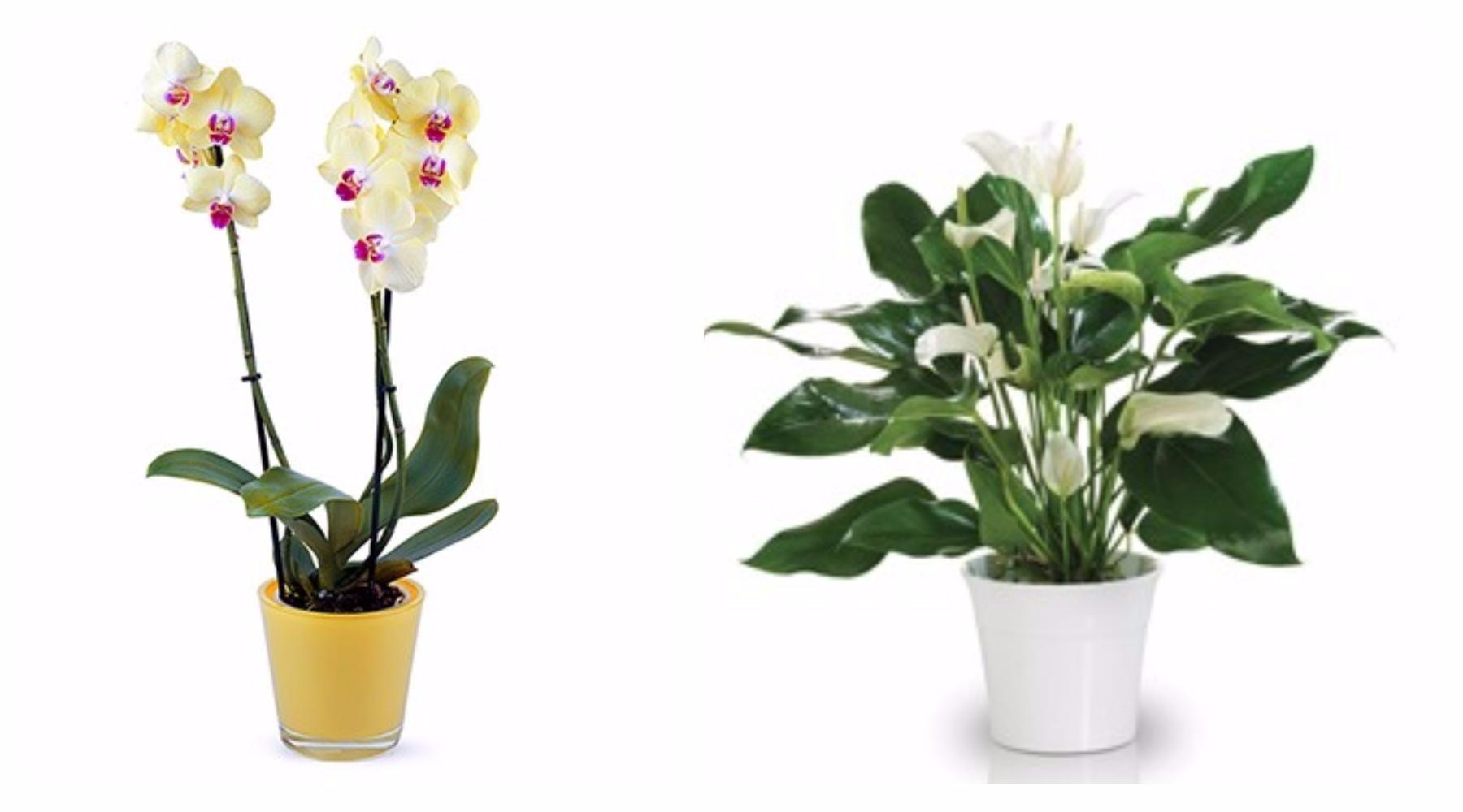 floraqueen fleur plante deco