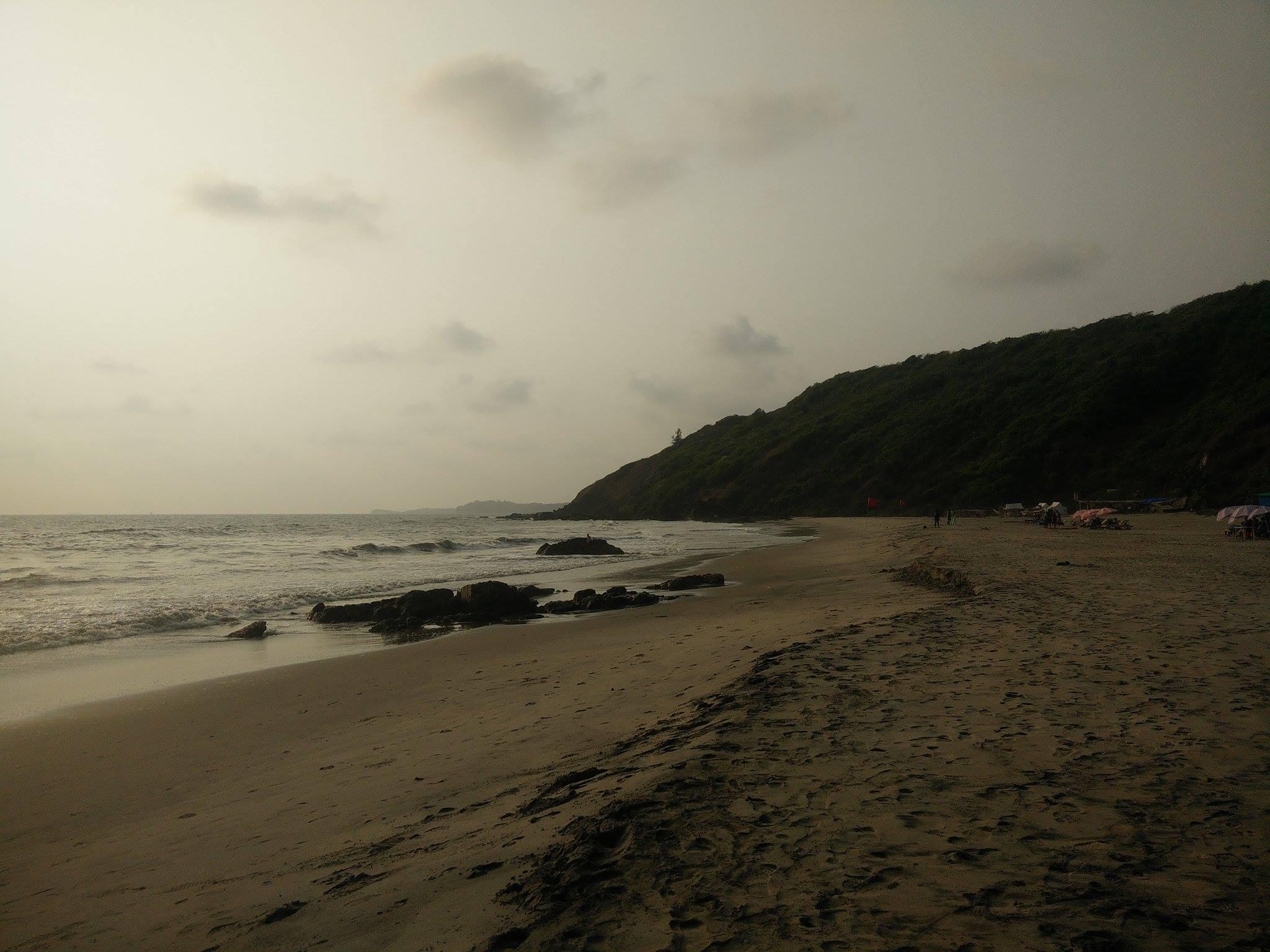 plage verdure vegetation inde goa arambol