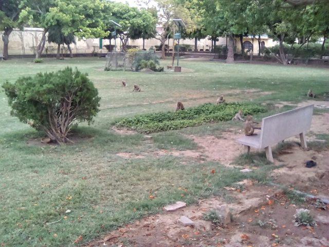 visite jaipur parc ville singe