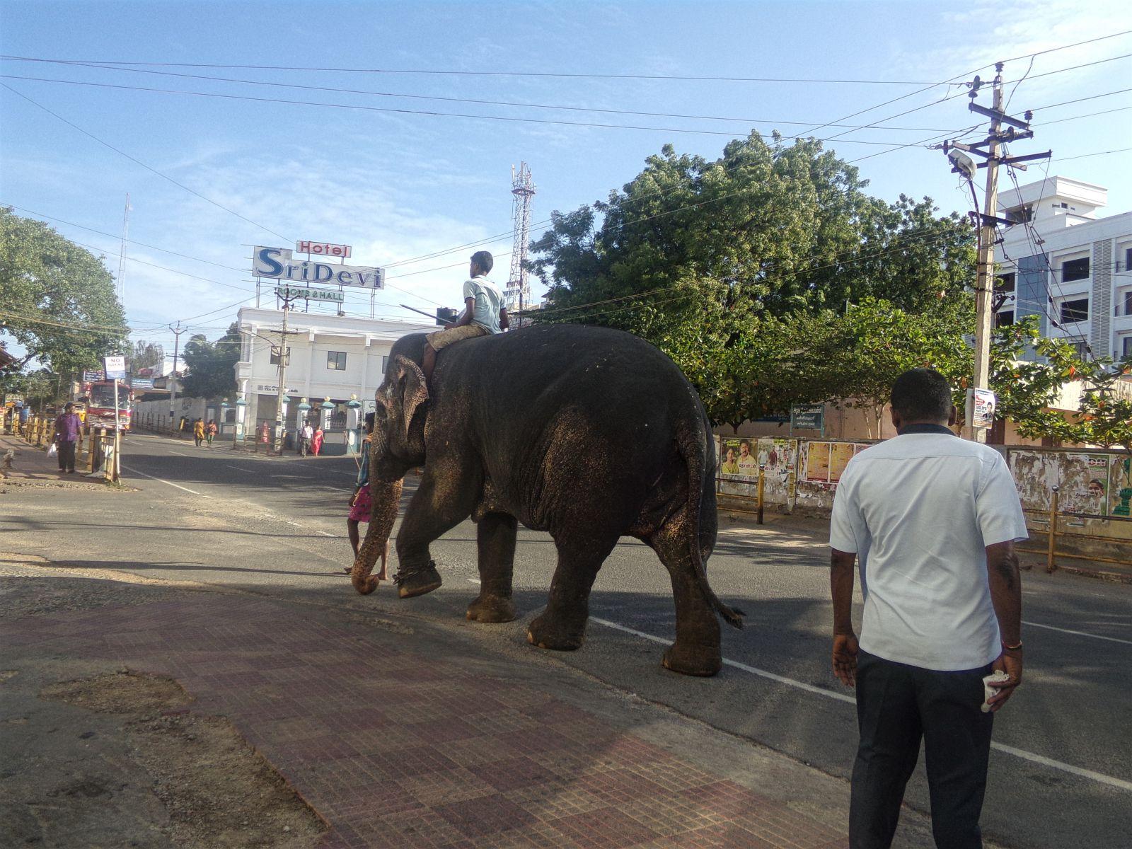 elephant kanyakumari inde du sud vie nomade