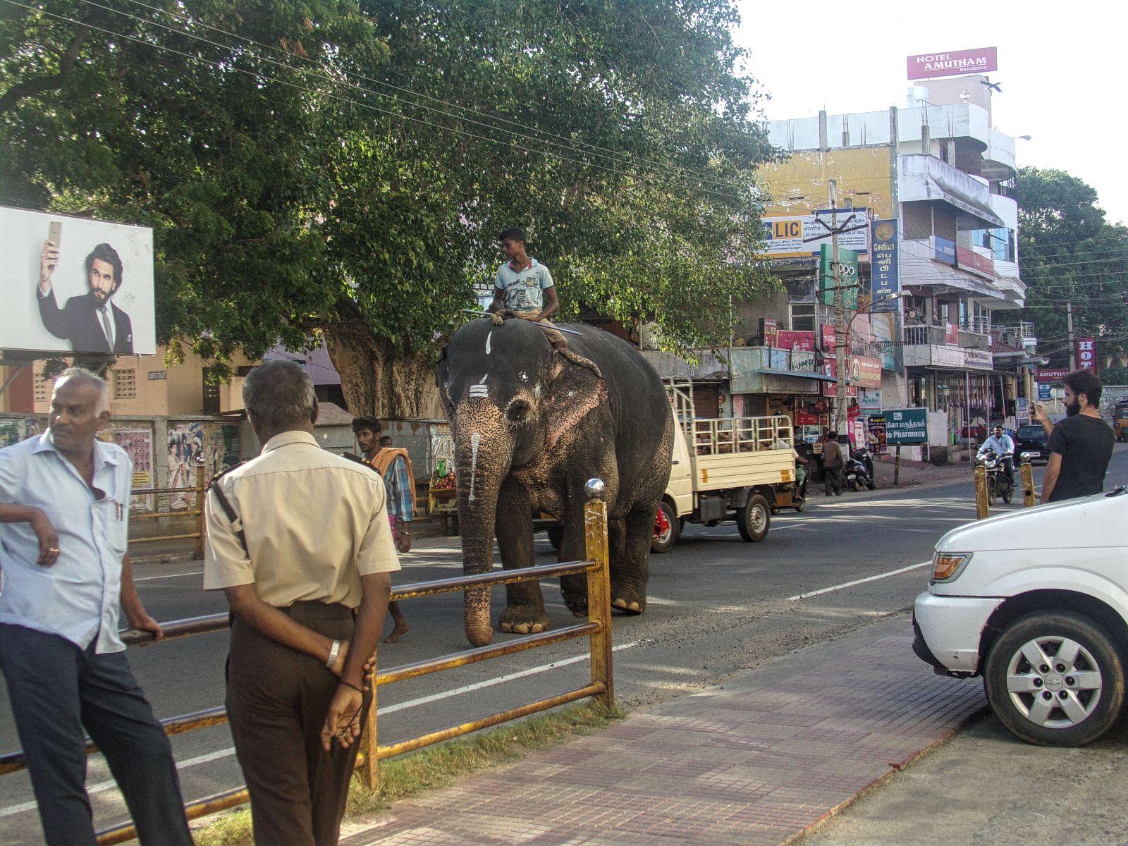 kanyakumari elephant inde du sud