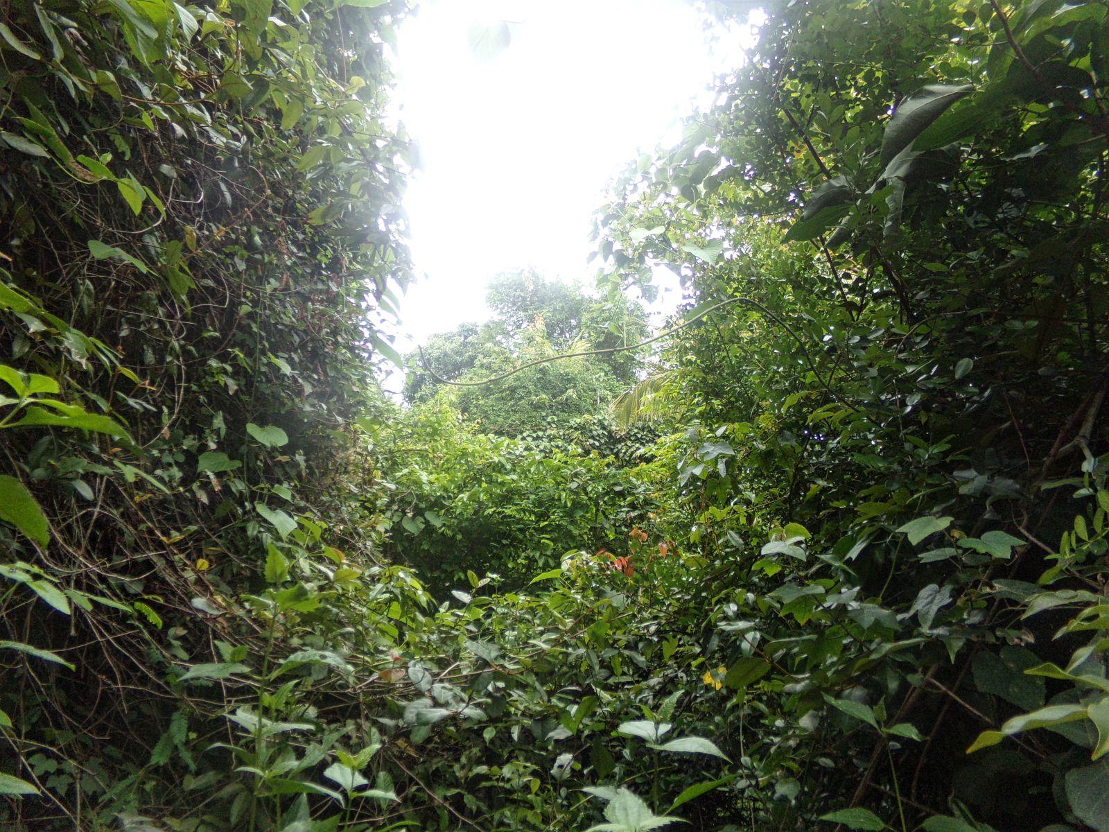 varkala inde du sud jungle