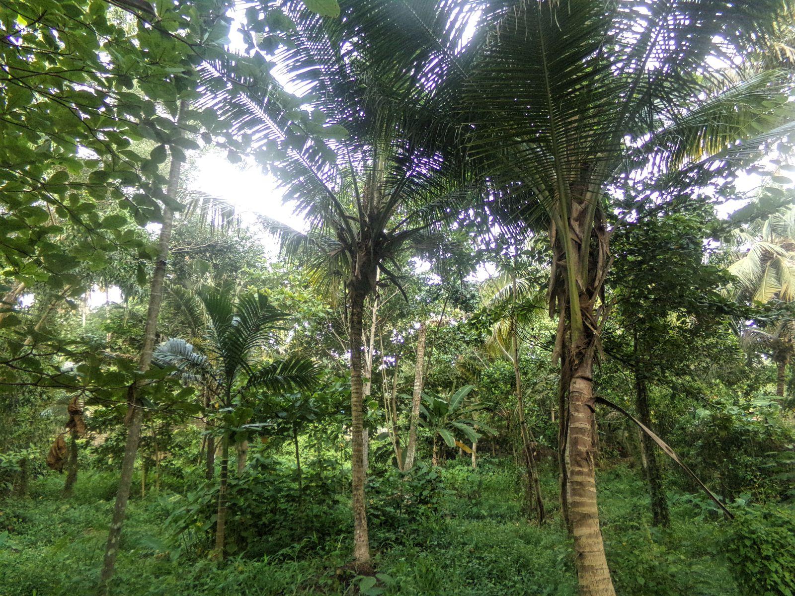 varkala paysage cocotier inde vie nomade