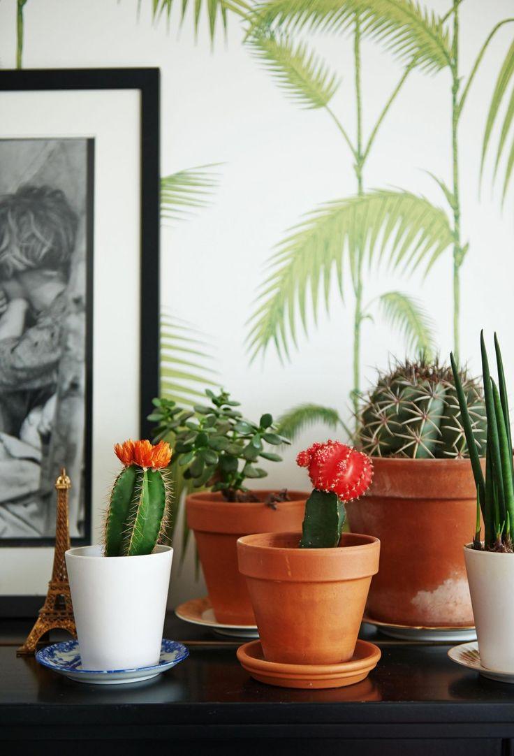 deco cactus plante interieur