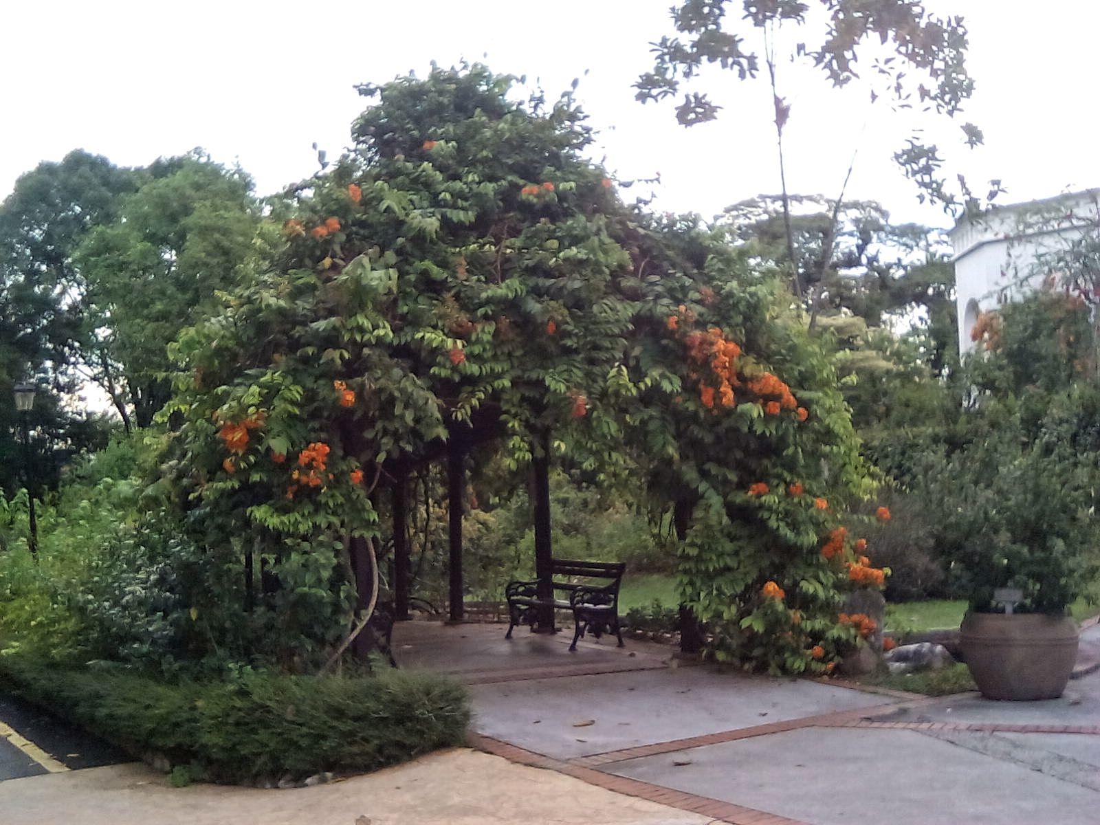 jardin hibiscus kuala lumpur nature malaisie