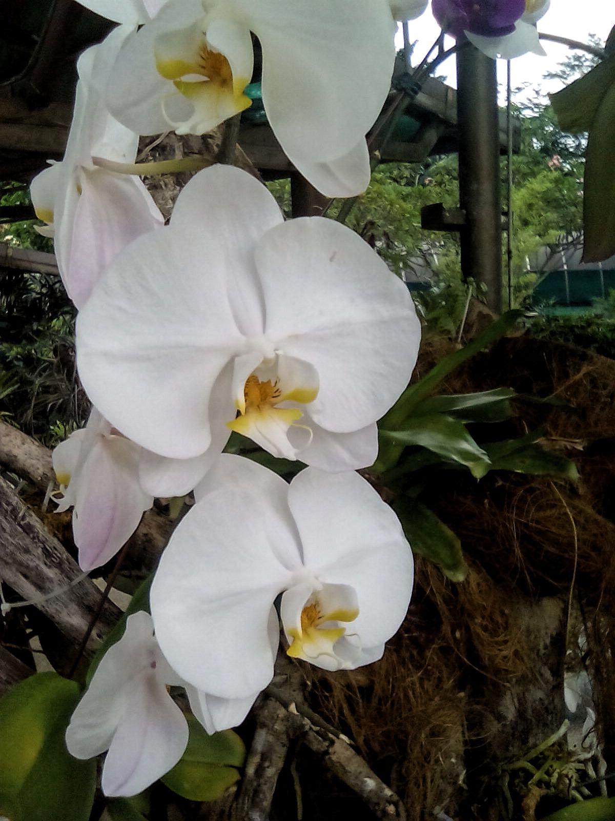 orchidee jardin kuala lumpur idee visite gratuite