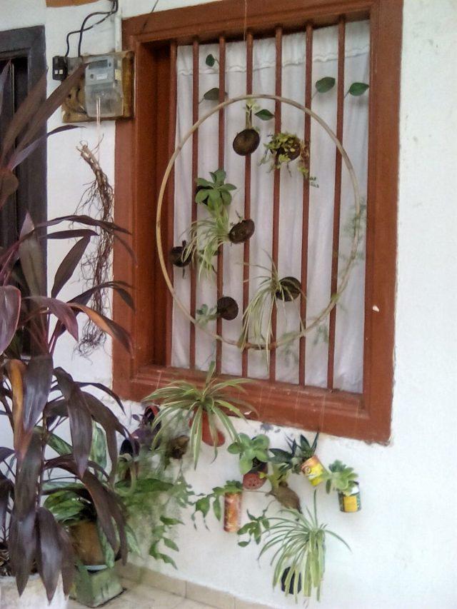detail deco maison exterieur georgetown plante nature