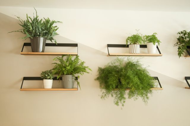 visite deco narma plante inspiration decoration interieur bureau